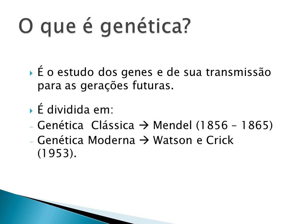 É o estudo dos genes e de sua transmissão para as gerações futuras.