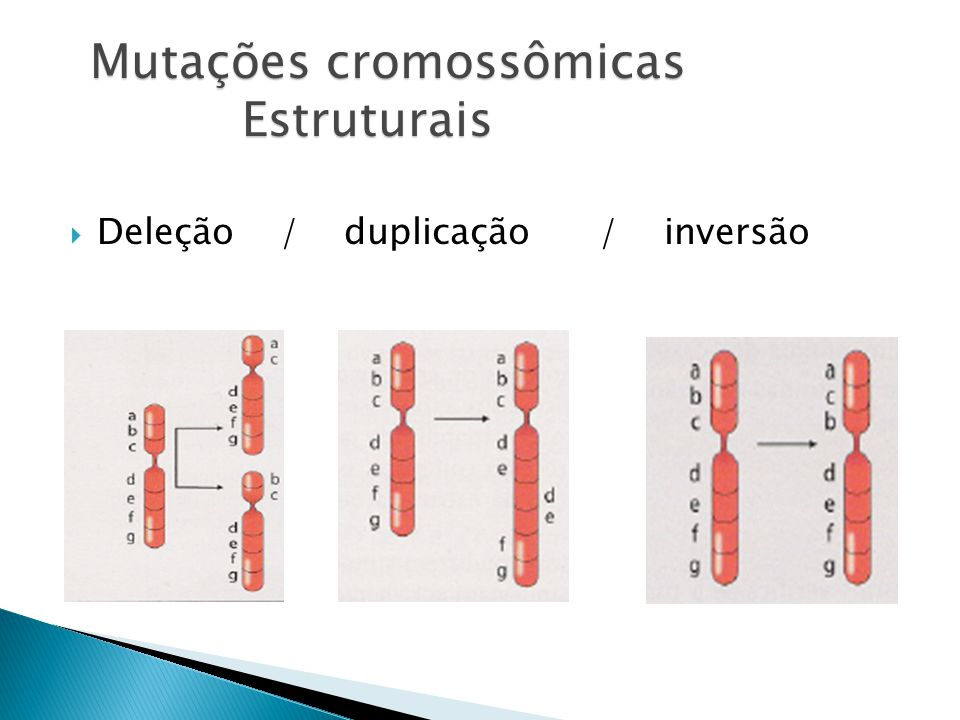 Mutações cromossômicas Estruturais Deleção / duplicação / inversão