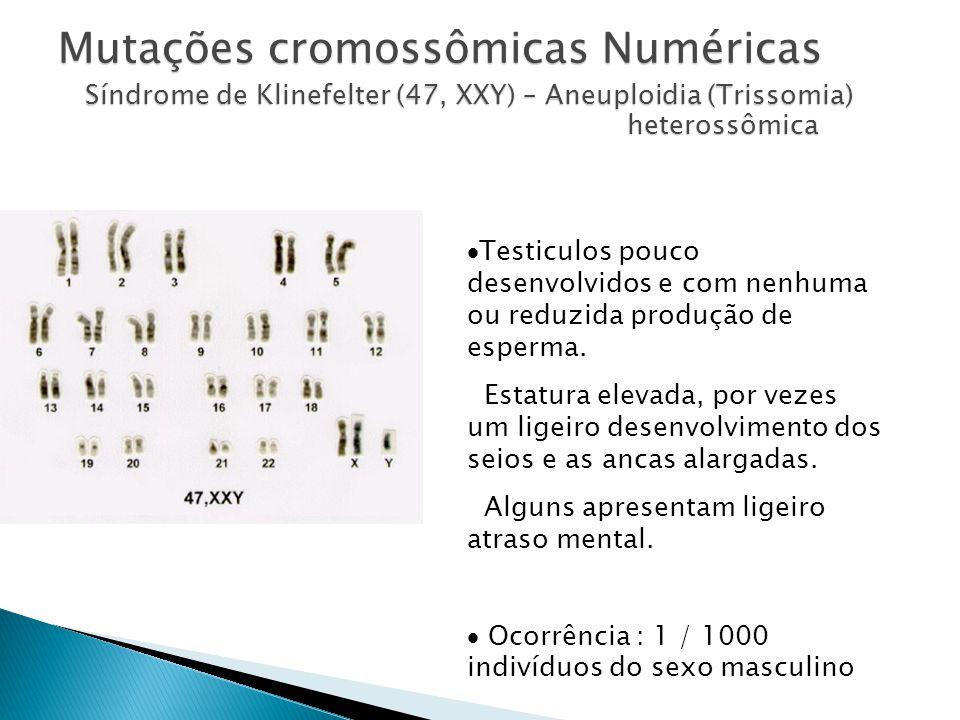 Mutações cromossômicas Numéricas Síndrome de Klinefelter (47, XXY) – Aneuploidia (Trissomia) heterossômica Testiculos pouco desenvolvidos e com nenhuma ou reduzida produção de esperma.
