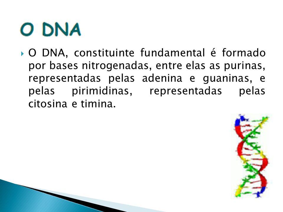 O DNA, constituinte fundamental é formado por bases nitrogenadas, entre elas as purinas, representadas pelas adenina e guaninas, e pelas pirimidinas, representadas pelas citosina e timina.