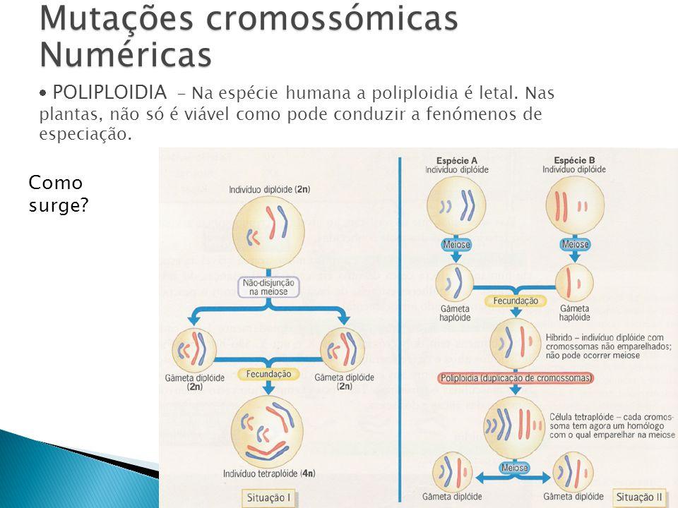 Mutações cromossómicas Numéricas POLIPLOIDIA - Na espécie humana a poliploidia é letal.