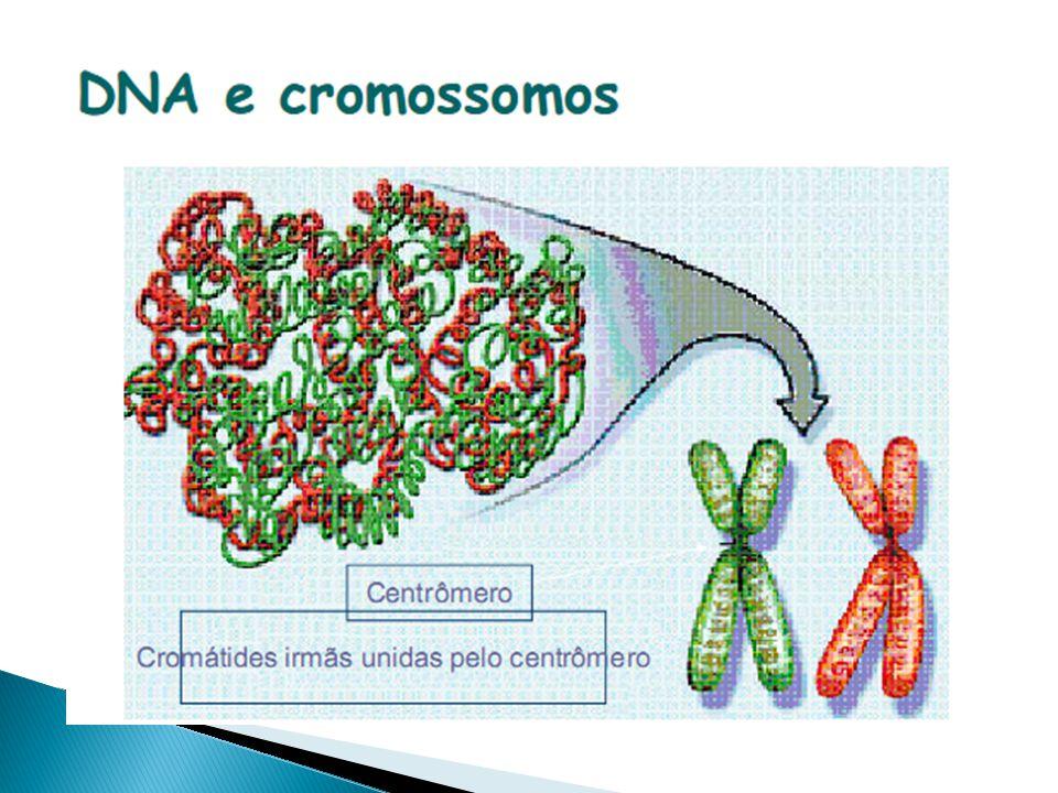 Mutações cromossômicas Numéricas - Como se originam as aneuploidias?