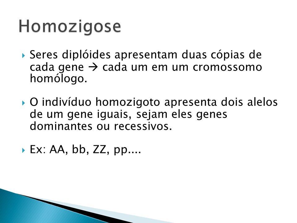 Seres diplóides apresentam duas cópias de cada gene cada um em um cromossomo homólogo.
