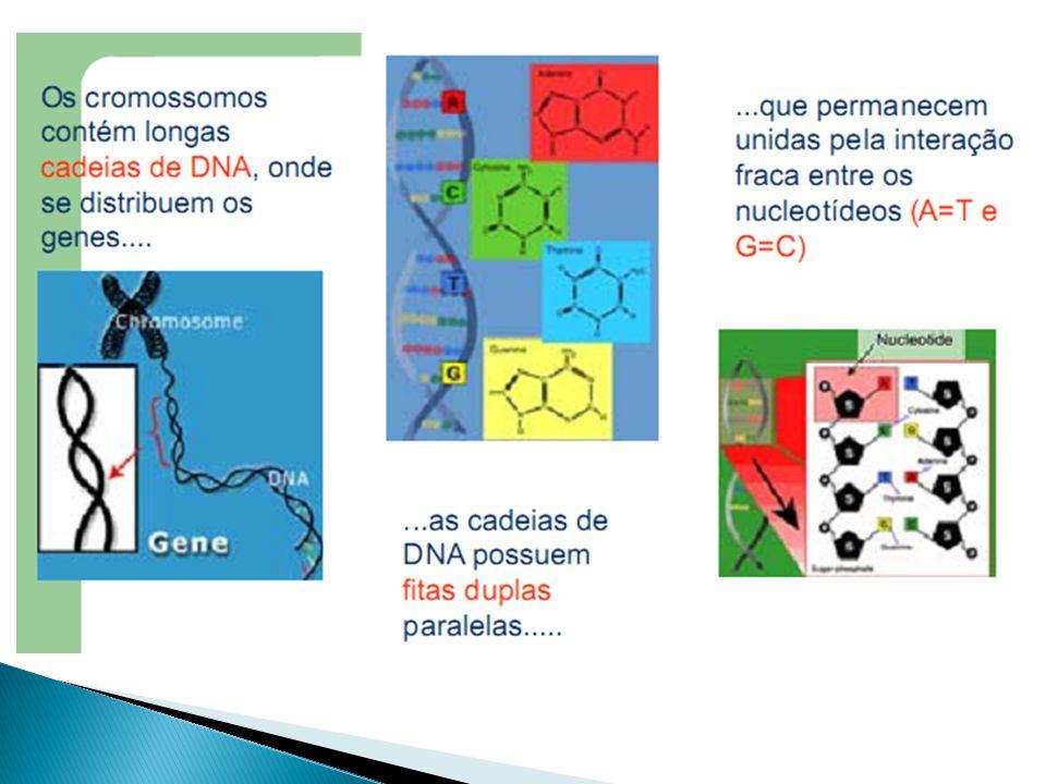F = G + A (Fenótipo é igual ao genótipo do indivíduo mais a ação do ambiente).