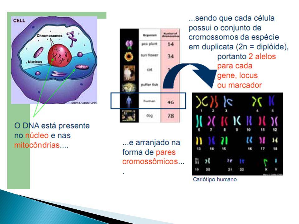 P c IAIA a P C IBIB a Genes alelos