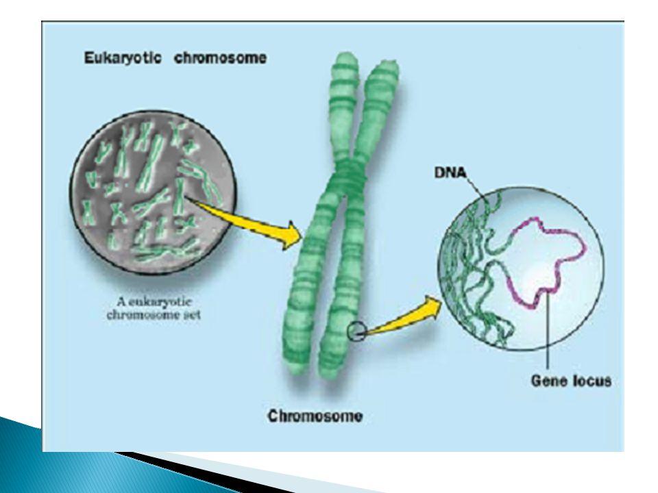 Mutações gênicas Inserção e deleção acontece quando uma ou mais bases são adicionadas ou removidas, respectivamente, ao DNA, modificando a sequência de leitura da molécula durante a replicação ou a transcrição.
