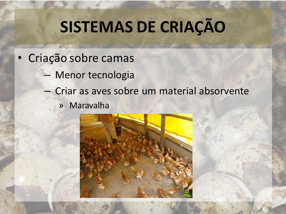 SISTEMAS DE CRIAÇÃO Criação sobre camas – Menor tecnologia – Criar as aves sobre um material absorvente » Maravalha