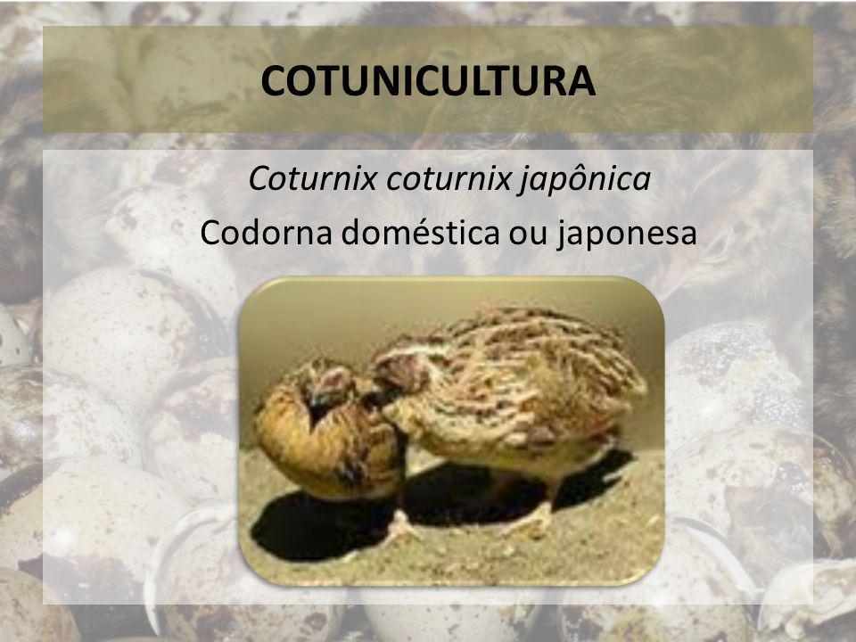 COTUNICULTURA Codornas japonesas atingem entre 115 a 180 gramas, quando adultas Crescem e se reproduzem em 45 - 50 dias Com 5 ou 6 semanas estão prontas para abate