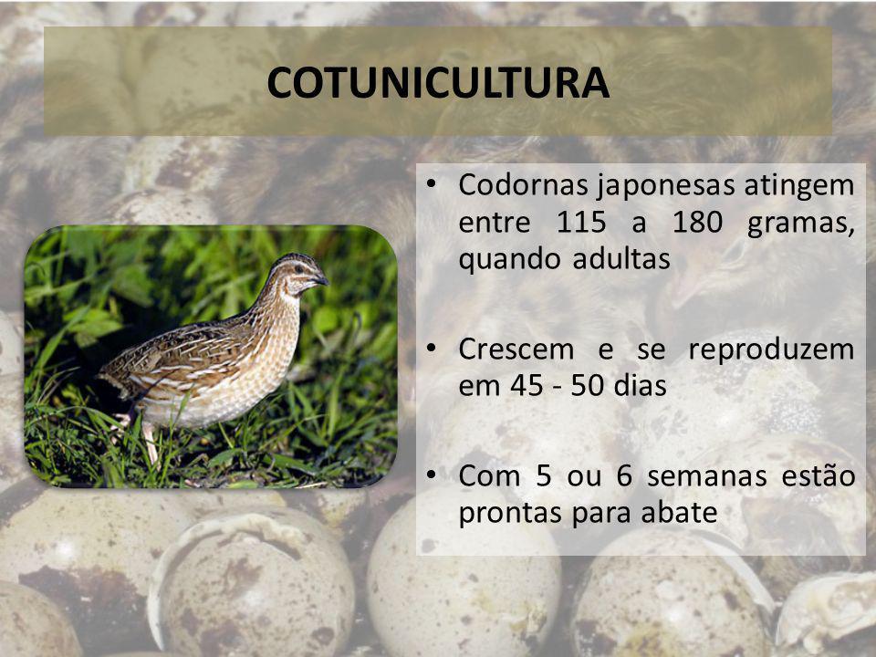 COTUNICULTURA Precisam de pouco espaço – Na área ocupada por uma só galinha podem ser criadas 42 codornas – Em um galpão de 30 m de comprimento e 5 m de largura, cabem até dez mil codornas (Costa, 2005)