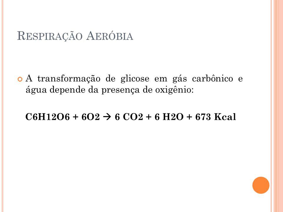 R ESPIRAÇÃO A ERÓBIA A transformação de glicose em gás carbônico e água depende da presença de oxigênio: C6H12O6 + 6O2 6 CO2 + 6 H2O + 673 Kcal