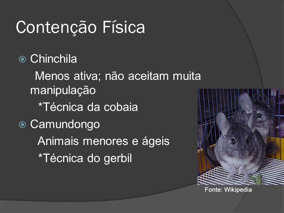 Contenção Física Chinchila Menos ativa; não aceitam muita manipulação *Técnica da cobaia Camundongo Animais menores e ágeis *Técnica do gerbil Fonte: