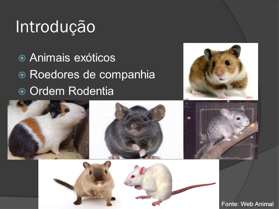 Introdução Animais exóticos Roedores de companhia Ordem Rodentia Fonte: Web Animal