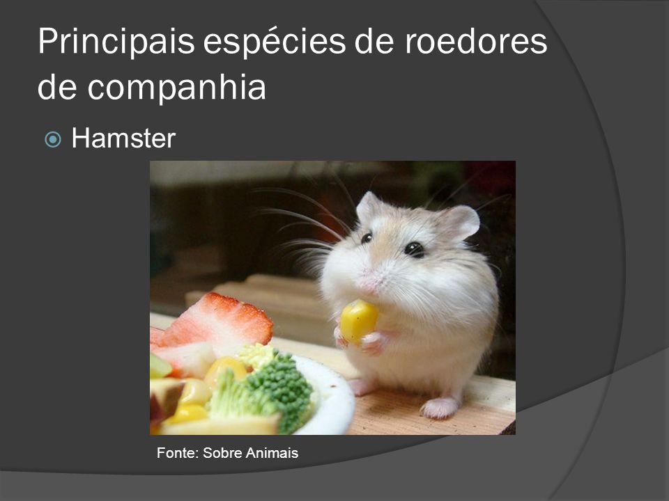 Principais espécies de roedores de companhia Hamster Fonte: Sobre Animais
