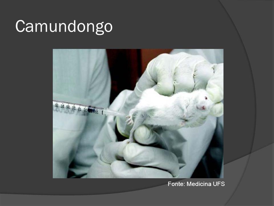Camundongo Fonte: Medicina UFS