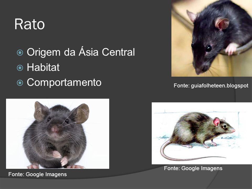 Rato Origem da Ásia Central Habitat Comportamento Fonte: Google Imagens Fonte: guiafolheteen.blogspot