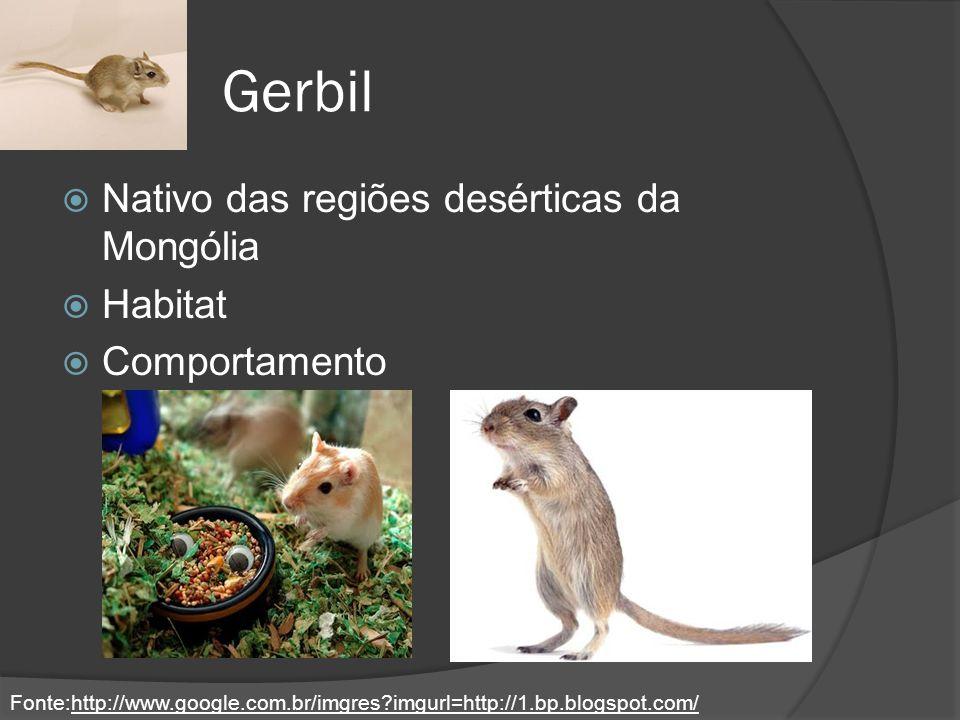 Gerbil Nativo das regiões desérticas da Mongólia Habitat Comportamento Fonte:http://www.google.com.br/imgres?imgurl=http://1.bp.blogspot.com/