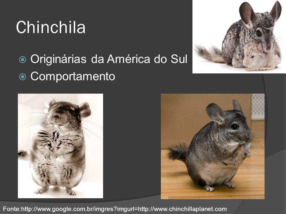 Chinchila Originárias da América do Sul Comportamento Fonte:http://www.google.com.br/imgres?imgurl=http://www.chinchillaplanet.com