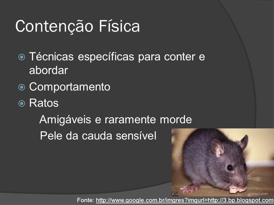 Contenção Física Técnicas específicas para conter e abordar Comportamento Ratos Amigáveis e raramente morde Pele da cauda sensível Fonte: http://www.g