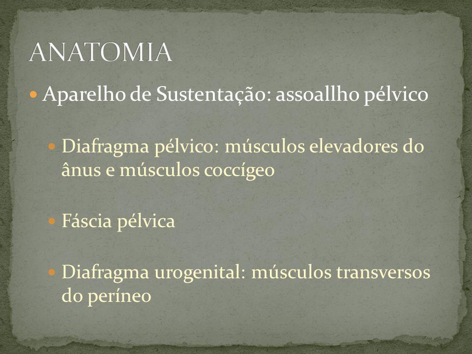 Aparelho de Sustentação: assoallho pélvico Diafragma pélvico: músculos elevadores do ânus e músculos coccígeo Fáscia pélvica Diafragma urogenital: mús