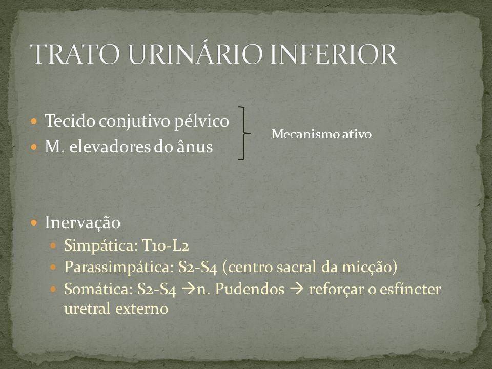 Tecido conjutivo pélvico M. elevadores do ânus Inervação Simpática: T10-L2 Parassimpática: S2-S4 (centro sacral da micção) Somática: S2-S4 n. Pudendos