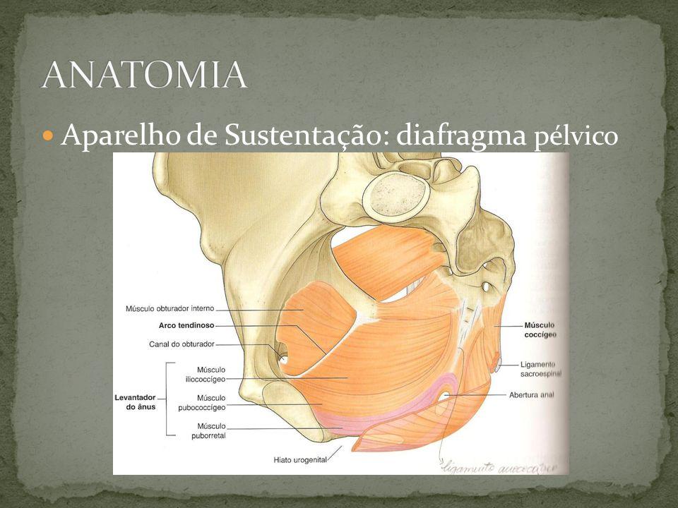 ENTEROCELE Herniação do intestino delgado Fáscia pélvica peritôneo em contato com parede vaginal Apical Anterior Posterior