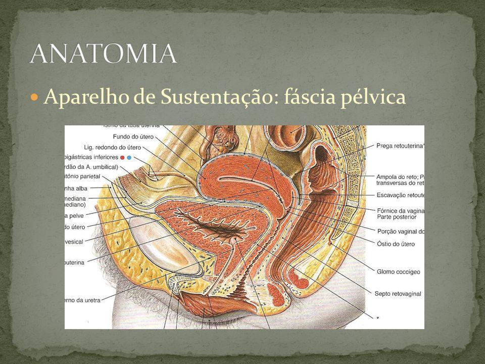 Fisiopatologia pressão intra- abdominal aparelhos de sustentação e de suspensão obesidade DPOC tosse espirro multiparidade nutrição doenças neurológicas idade