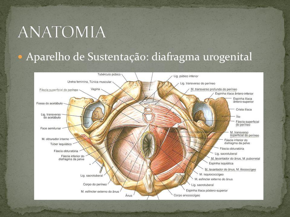 Lesão das estruturas de suporte do colo vesical hipermotilidade da uretra (abertura) Teoria integral: Predomínio da ação em direção posterior impede o fechamento da uretra