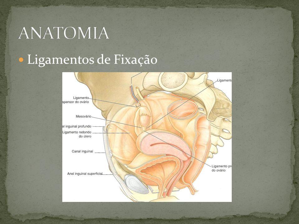 Desvio do útero para a região sacra Etiologia Distensão dos ligamentos uterossacros deslocamento anterior do colo Aderências: endometriose e DIP (fixa) Tumores anteriores Alteração da involução uterina no pós-parto