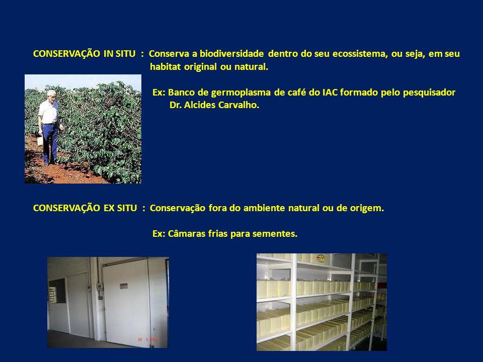 CONSERVAÇÃO IN SITU : Conserva a biodiversidade dentro do seu ecossistema, ou seja, em seu habitat original ou natural.