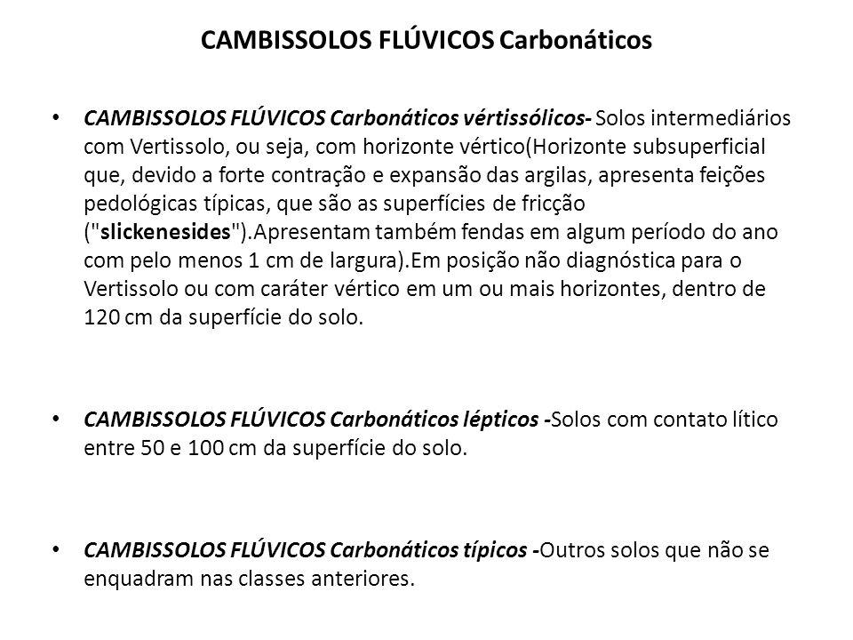 CAMBISSOLOS FLÚVICOS Sódicos CAMBISSOLOS FLÚVICOS Sódicos salinos -Solos com caráter salino em um ou mais horizontes, dentro de 120 cm da superfície.