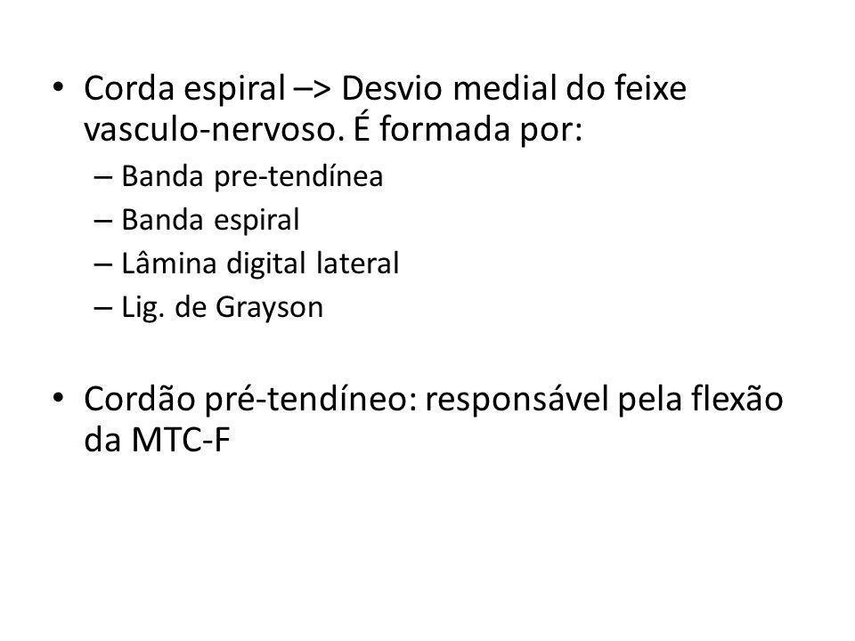 Corda espiral –> Desvio medial do feixe vasculo-nervoso. É formada por: – Banda pre-tendínea – Banda espiral – Lâmina digital lateral – Lig. de Grayso
