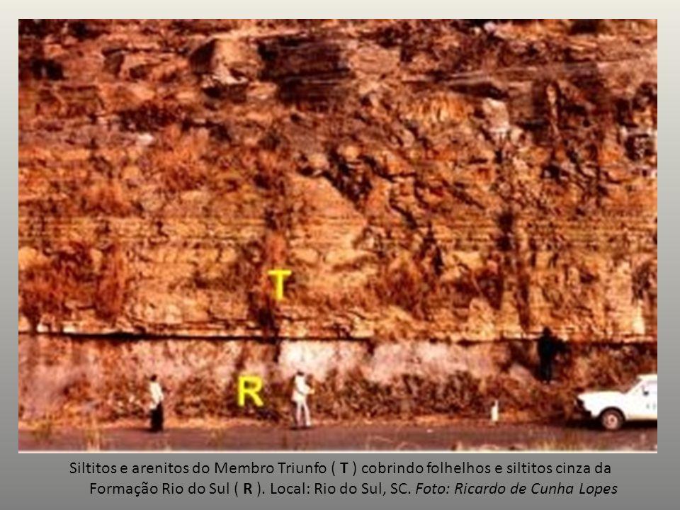 Siltitos e arenitos do Membro Triunfo ( T ) cobrindo folhelhos e siltitos cinza da Formação Rio do Sul ( R ). Local: Rio do Sul, SC. Foto: Ricardo de