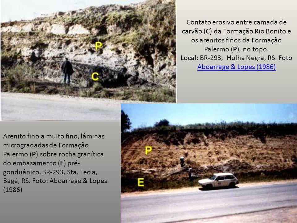 Contato erosivo entre camada de carvão (C) da Formação Rio Bonito e os arenitos finos da Formação Palermo (P), no topo.