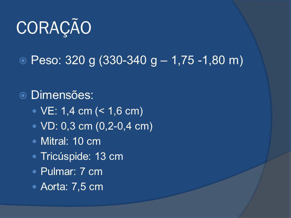CORAÇÃO Peso: 320 g (330-340 g – 1,75 -1,80 m) Dimensões: VE: 1,4 cm (< 1,6 cm) VD: 0,3 cm (0,2-0,4 cm) Mitral: 10 cm Tricúspide: 13 cm Pulmar: 7 cm A