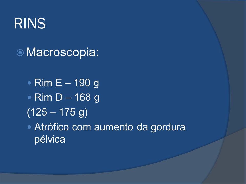 RINS Macroscopia: Rim E – 190 g Rim D – 168 g (125 – 175 g) Atrófico com aumento da gordura pélvica