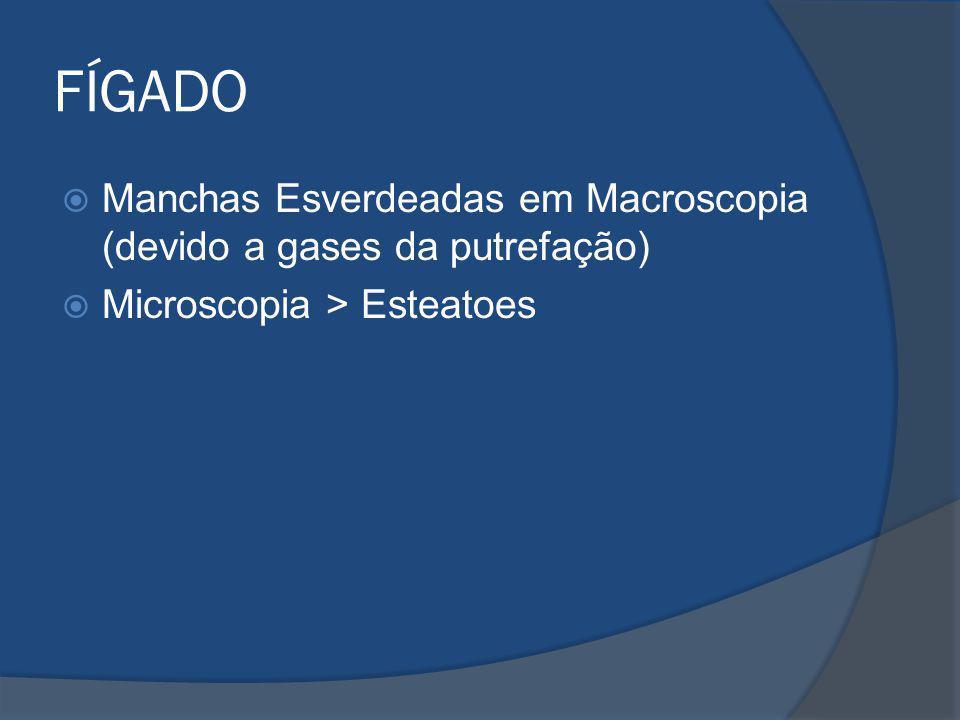 FÍGADO Manchas Esverdeadas em Macroscopia (devido a gases da putrefação) Microscopia > Esteatoes