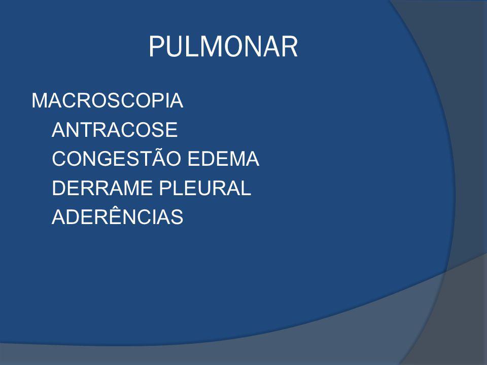 PULMONAR MACROSCOPIA ANTRACOSE CONGESTÃO EDEMA DERRAME PLEURAL ADERÊNCIAS