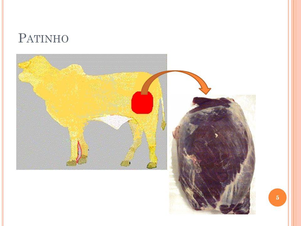 P ATINHO 5