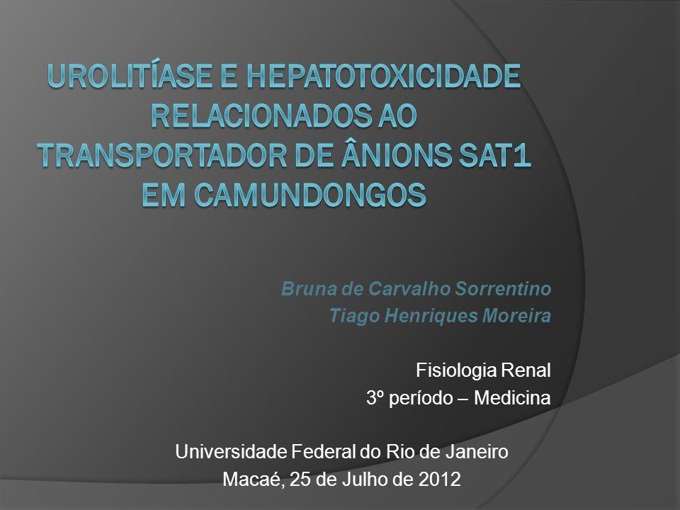 Bruna de Carvalho Sorrentino Tiago Henriques Moreira Fisiologia Renal 3º período – Medicina Universidade Federal do Rio de Janeiro Macaé, 25 de Julho de 2012