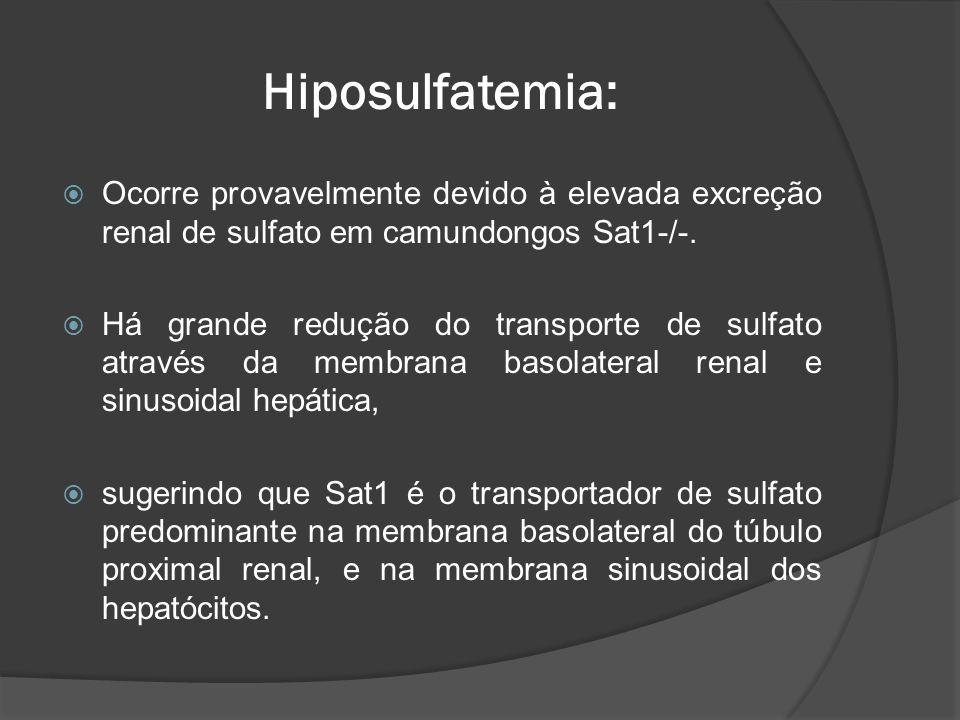 Hiposulfatemia: Ocorre provavelmente devido à elevada excreção renal de sulfato em camundongos Sat1-/-.