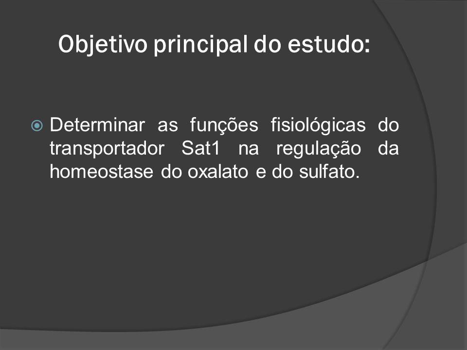 Urolithiasis in Sat1–/– mice.