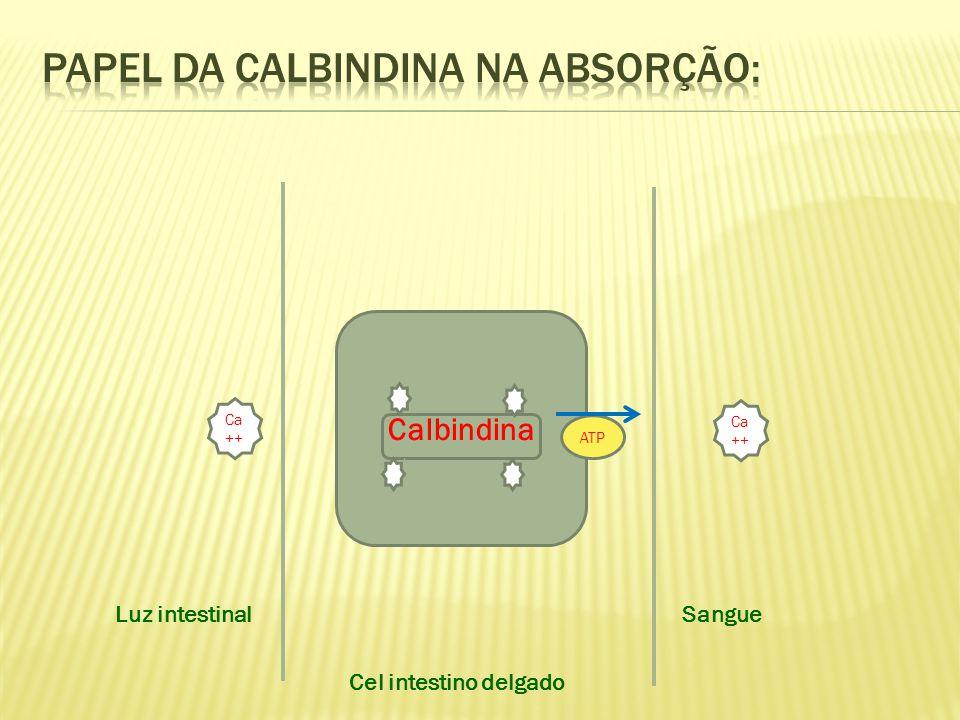 Calbindina ATP Cel intestino delgado Sangue Luz intestinal Ca ++
