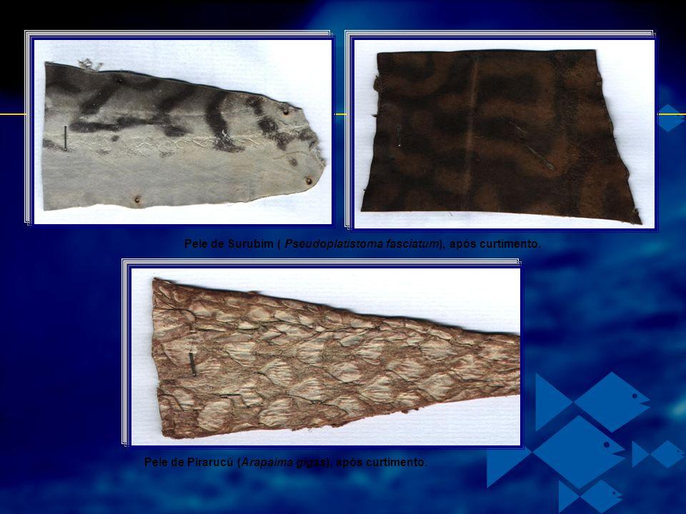 Pele de Surubim ( Pseudoplatistoma fasciatum), após curtimento. Pele de Pirarucú (Arapaima gigas), após curtimento.