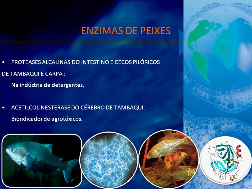 ENZIMAS DE PEIXES PROTEASES ALCALINAS DO INTESTINO E CECOS PILÓRICOS DE TAMBAQUI E CARPA : Na indústria de detergentes, ACETILCOLINESTERASE DO CÉREBRO