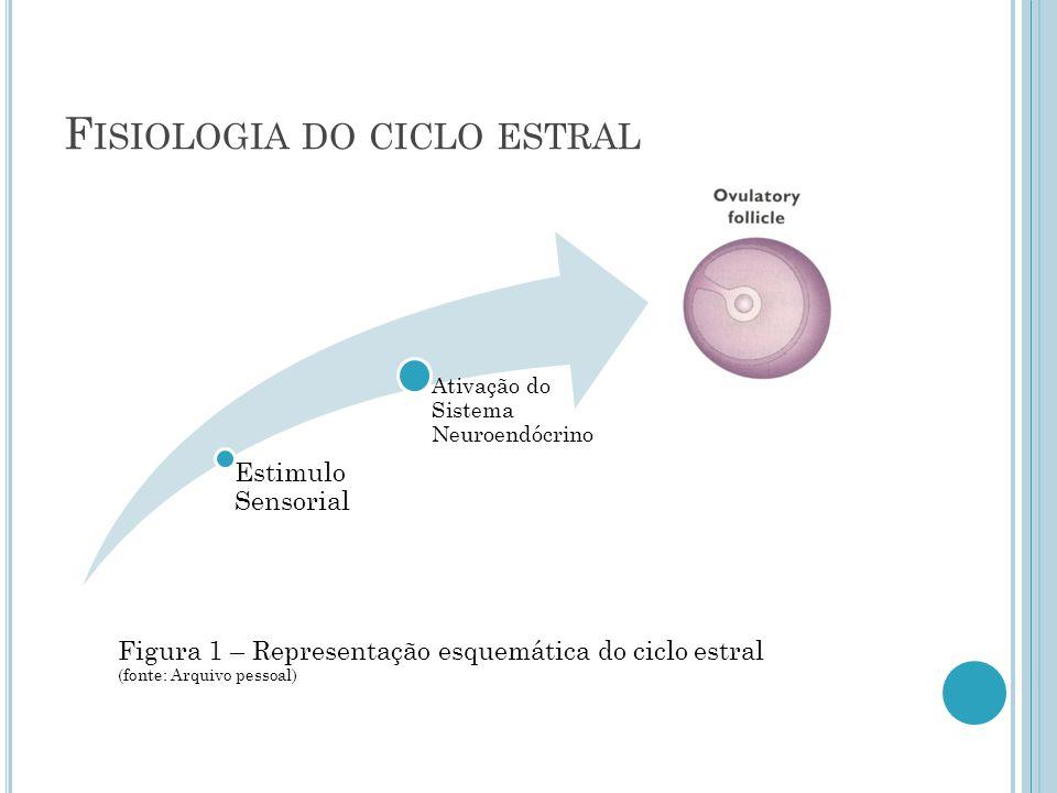 F ISIOLOGIA DO CICLO ESTRAL Estimulo Sensorial Ativação do Sistema Neuroendócrino Figura 1 – Representação esquemática do ciclo estral (fonte: Arquivo pessoal)