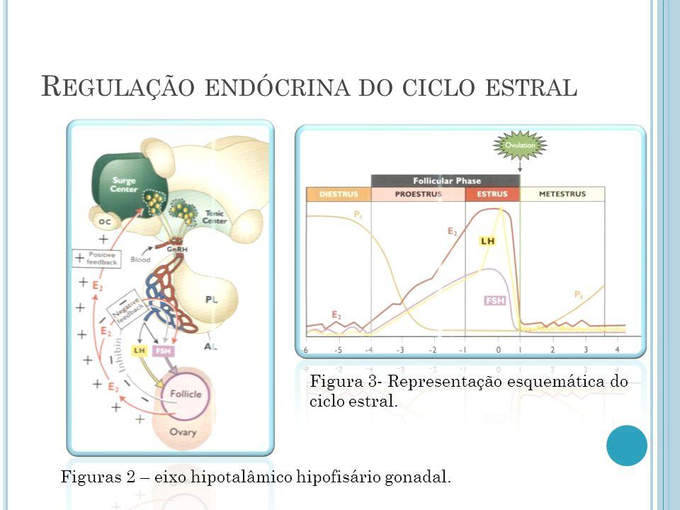 R EGULAÇÃO ENDÓCRINA DO CICLO ESTRAL Figuras 2 – eixo hipotalâmico hipofisário gonadal.