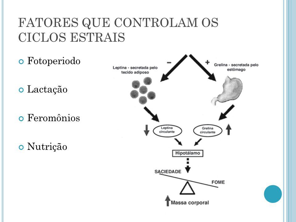 FATORES QUE CONTROLAM OS CICLOS ESTRAIS Fotoperiodo Lactação Feromônios Nutrição
