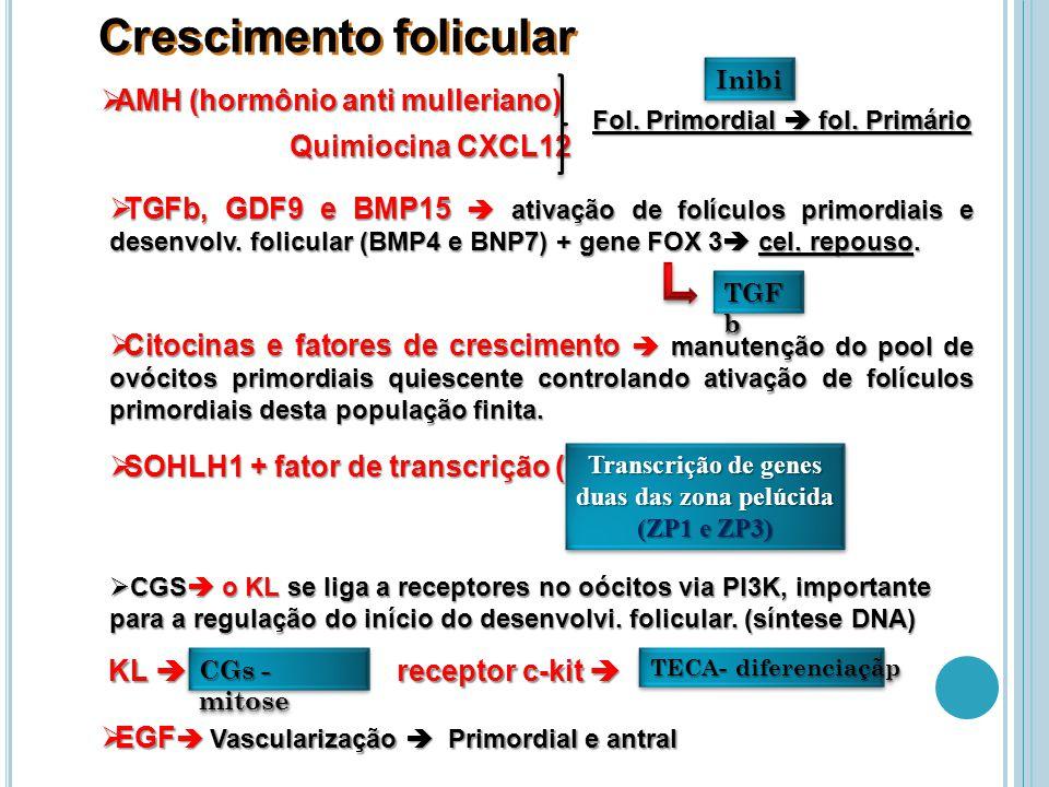Crescimento folicular AMH (hormônio anti mulleriano) AMH (hormônio anti mulleriano) InibiInibi Quimiocina CXCL12 Fol.