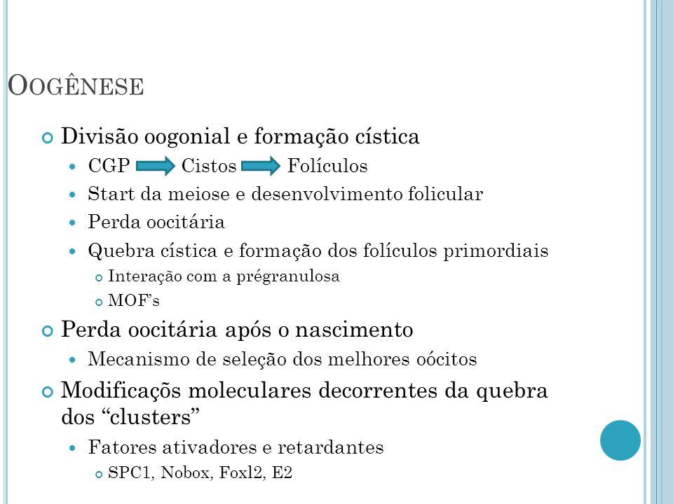 Divisão oogonial e formação cística CGP Cistos Folículos Start da meiose e desenvolvimento folicular Perda oocitária Quebra cística e formação dos folículos primordiais Interação com a prégranulosa MOFs Perda oocitária após o nascimento Mecanismo de seleção dos melhores oócitos Modificaçõs moleculares decorrentes da quebra dos clusters Fatores ativadores e retardantes SPC1, Nobox, Foxl2, E2 O OGÊNESE