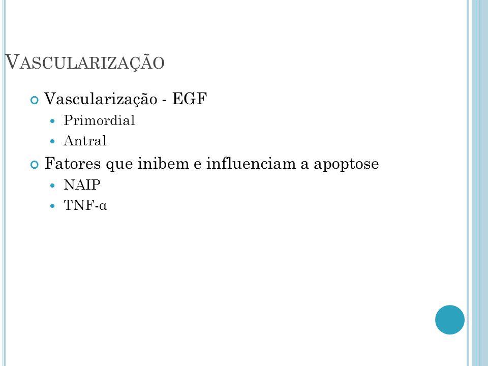 V ASCULARIZAÇÃO Vascularização - EGF Primordial Antral Fatores que inibem e influenciam a apoptose NAIP TNF-α